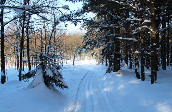 Lyžařská stopa v oblasti Sněžníku