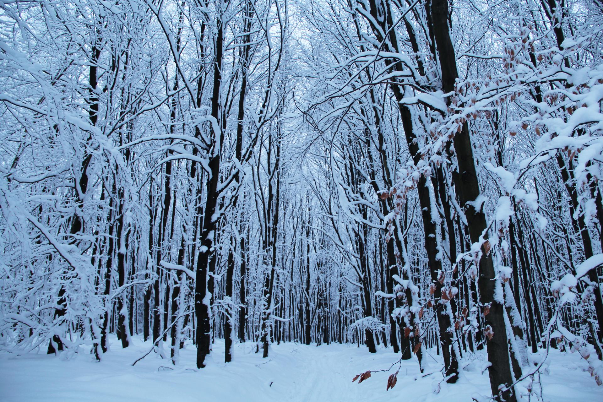 Zasněžený les v oblasti Tiských stěn