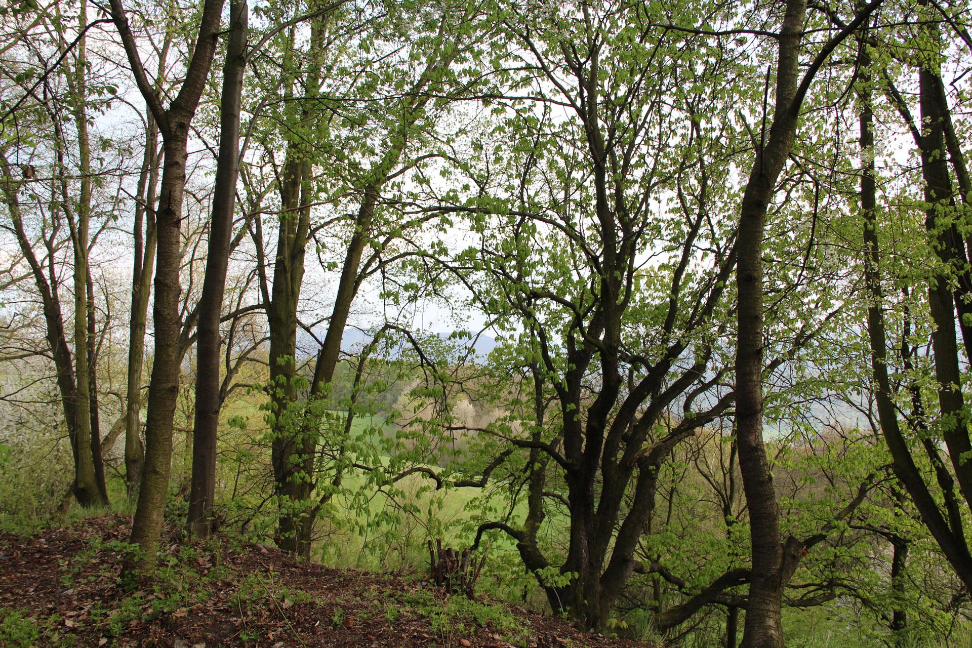 Rozhled přes stromy z vrcholu ferraty Pustevna