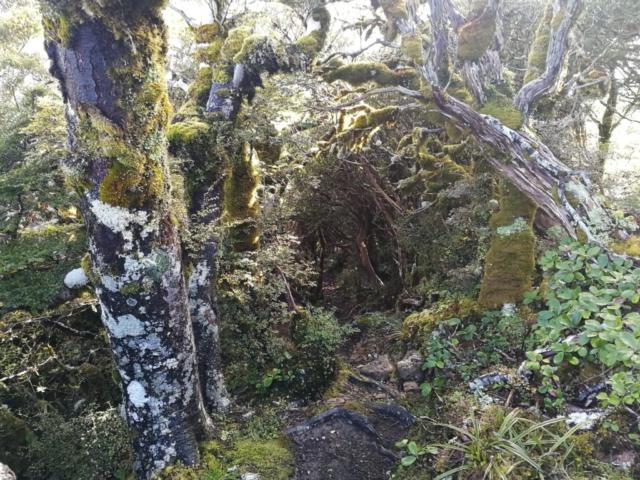 Novozélandská džungle při úbočí hory Hikurangi