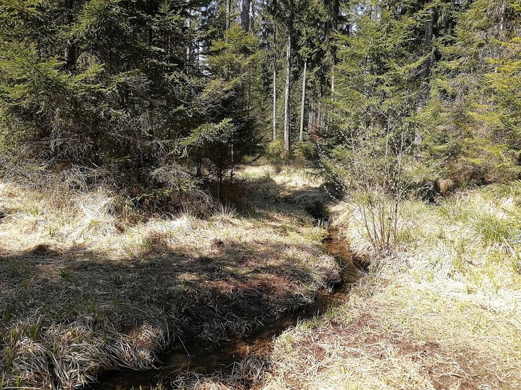 Potok v lese na českoněmeckých hranicích
