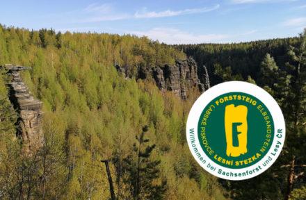 Vyhlídka při treku Forststei na lesy a pískovcové věže