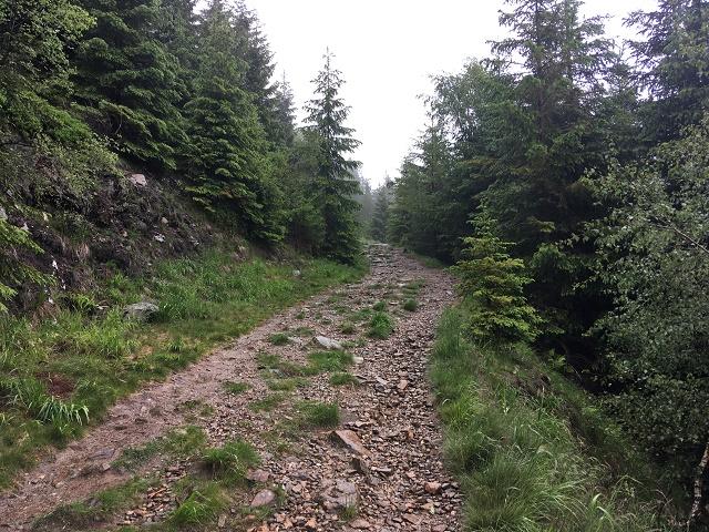 Lesní cesta od chaty Panorama